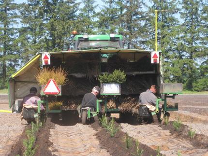 Skovrejsning med tilskud